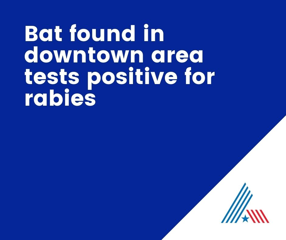 Bat found in downtown area tests positive for rabies (2)